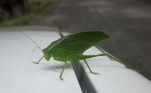 The little bug