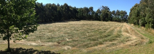 Hay cut at Nyora dec 2012
