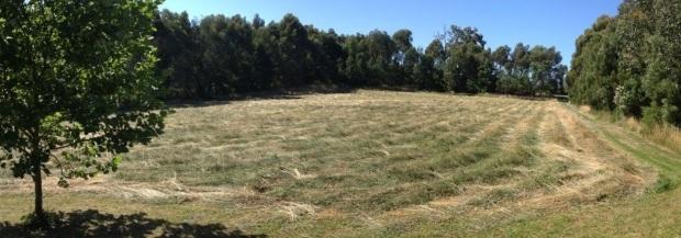 Hay cut at Nyora dec 2012