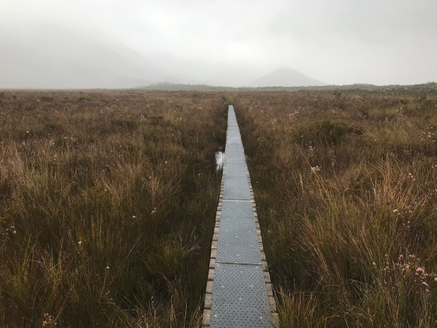Button Grass Track